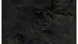 black-poodle-velvet