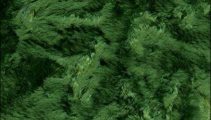 green-poodle-velvet